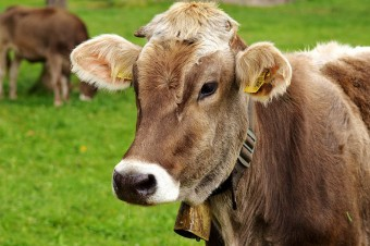 Belarus bans beef imports from several regions in China