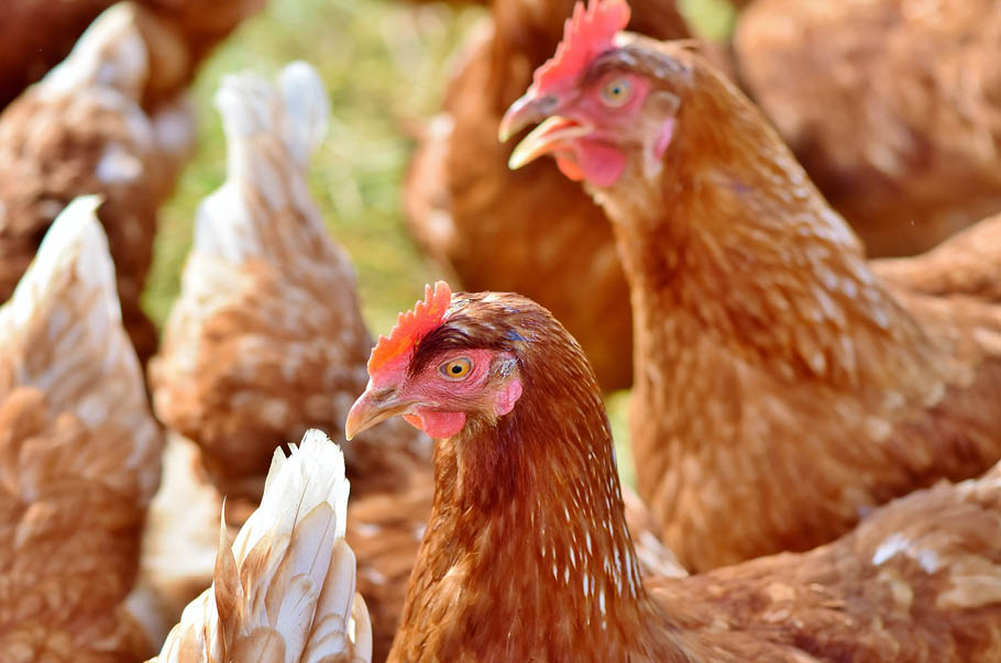 Norwegian company to build new poultry processing facility for €185 million