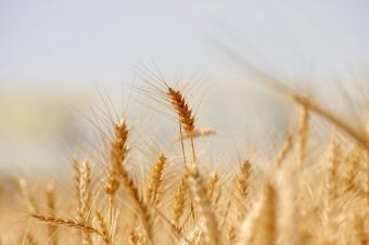 Polish agri-food export