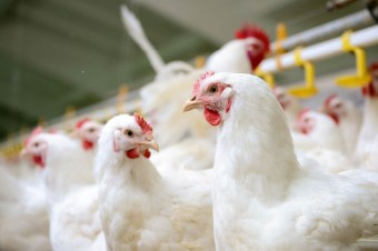 The Polish poultry industry is a leader aware of the challenges in 2019